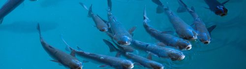 Vis en bijproducten